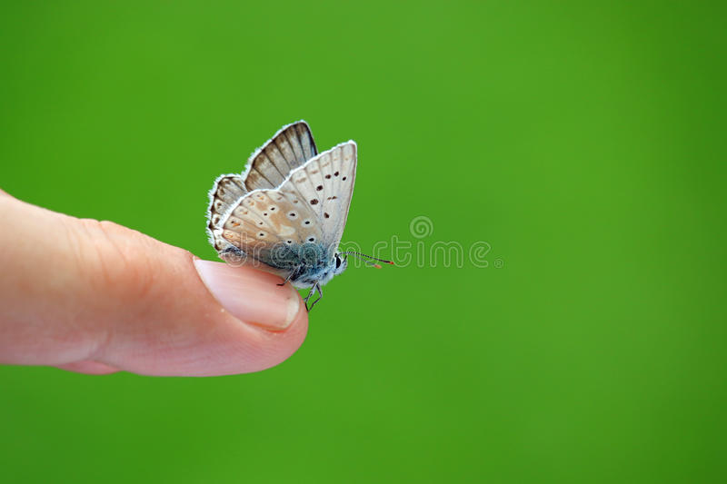 Butterfly on finger with green background stock image