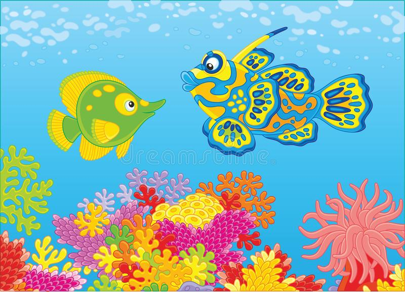 Butterfly fish and Mandarin fish. A funny butterflyfish and a tangerine fish swimming in blue water over a colorful coral reef in a tropical sea, a vector stock illustration