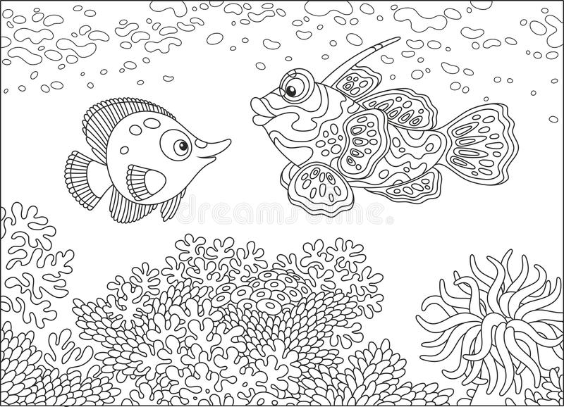 Butterfly fish and Mandarin fish. A funny butterfly-fish and a tangerine fish swimming over a coral reef in a tropical sea, a black and white vector illustration royalty free illustration