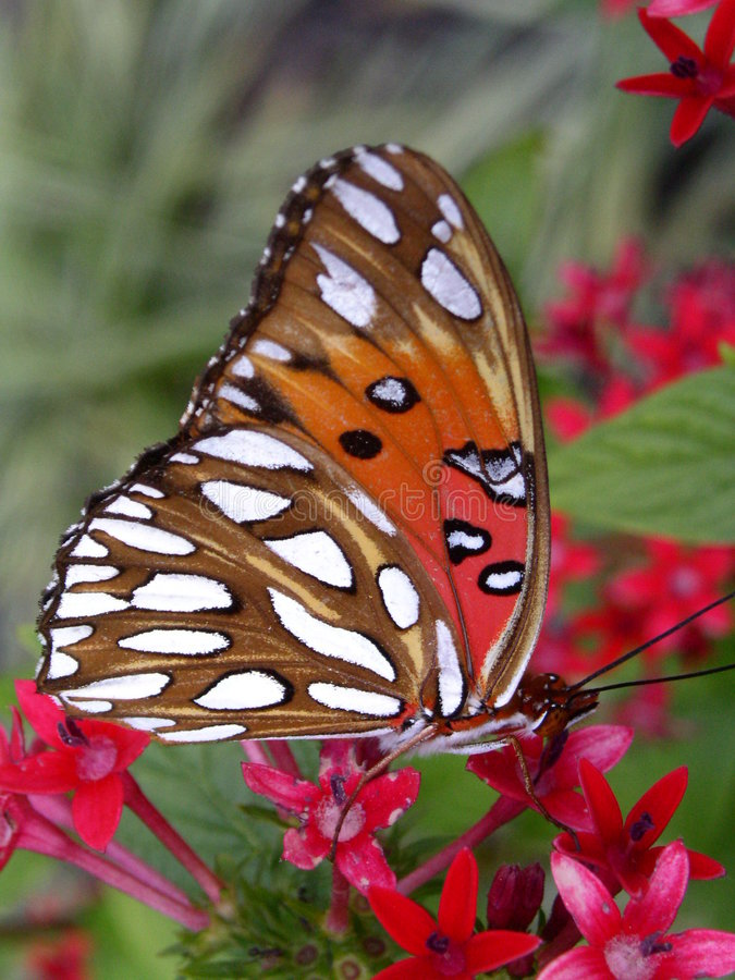 Download Butterfly & Flower stock image. Image of spots, bugs, green - 4307