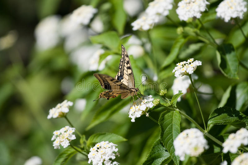 Download Butterfly on a flower stock photo. Image of animal, insect - 11051270