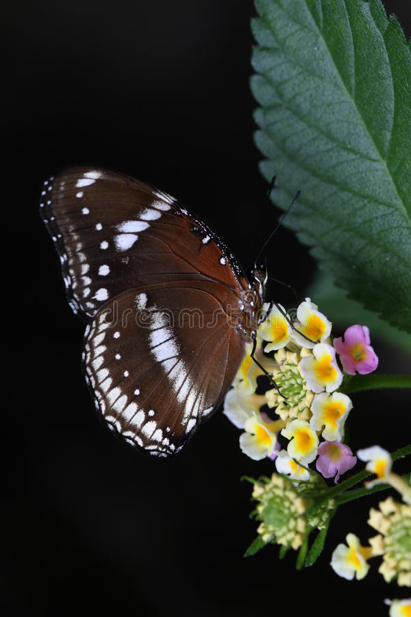 Butterfly and flower. Close up shoot of butterfly and flower royalty free stock photos