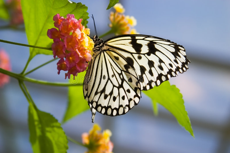 Download Butterfly on flower stock photo. Image of black, legs - 1411594
