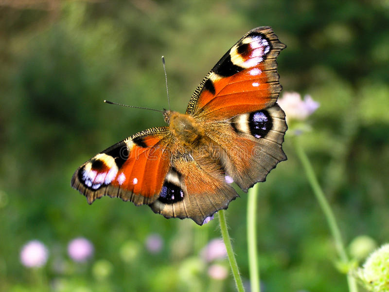 Butterfly on a flower stock photos