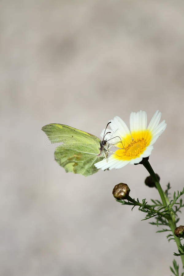 Butterfly On The Flower Stock Images