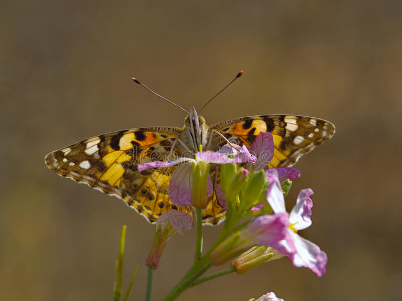The butterfly on a flower stock photo