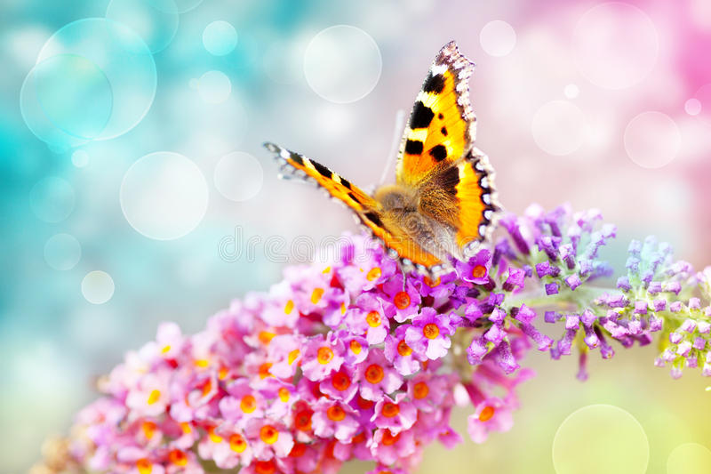 Butterfly on flower. Butterfly on colorful flower and bokeh light effect background