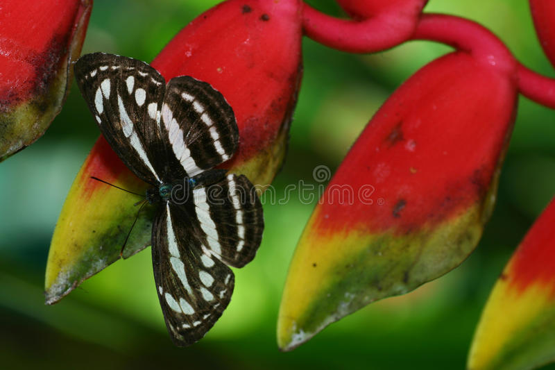 Download Butterfly on flower stock image. Image of flowerbeds - 28225305