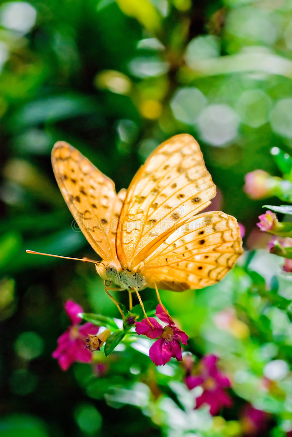 Download Butterfly On Flower Stock Images - Image: 5000044