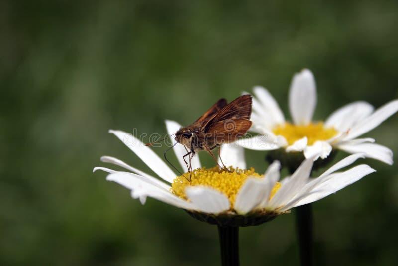 Butterfly_Flower Stockfotos