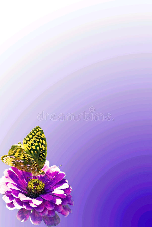 Butterfly and Flower Border royalty free stock image