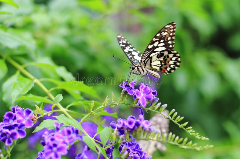 Butterfly and flower stock images