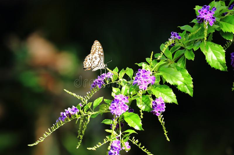 Beautiful Butterfly and flower royalty free stock images