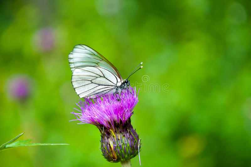 Download Butterfly on the flower stock image. Image of color, garden - 36986211