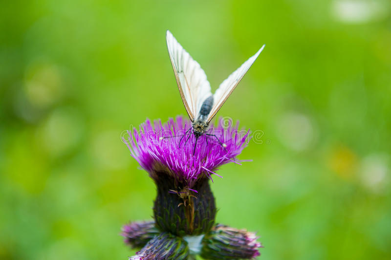 Download Butterfly on the flower stock image. Image of butterflies - 36986243