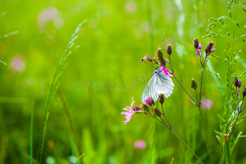 Download Butterfly on the flower stock photo. Image of wildlife - 36986244
