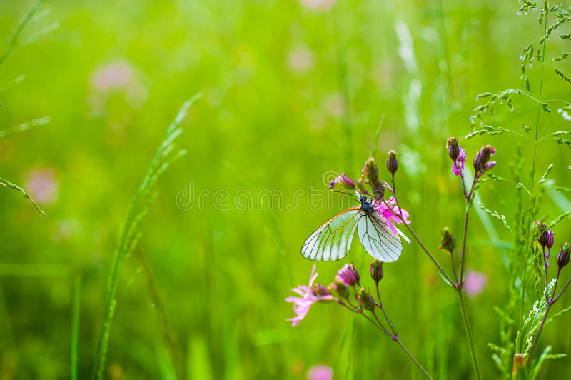 Download Butterfly on the flower stock photo. Image of green, butterflies - 36986248