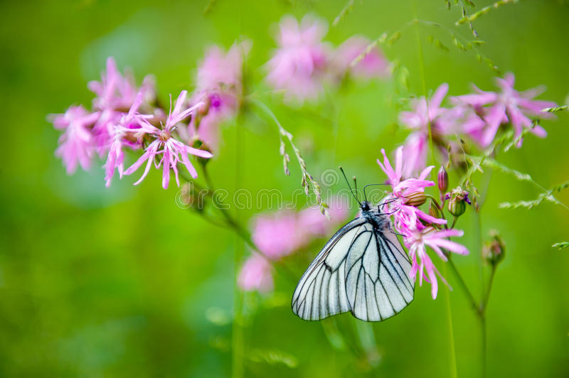 Download Butterfly on the flower stock image. Image of feeding - 36986259