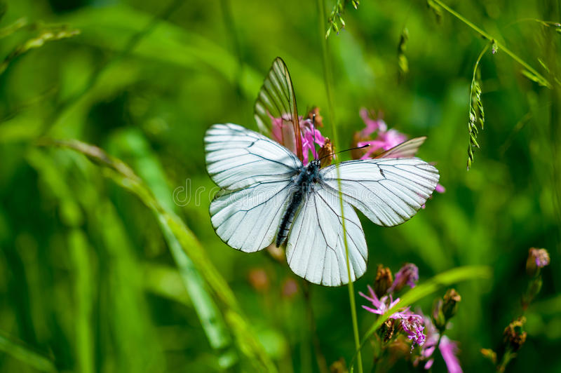 Butterfly On The Flower Stock Photos
