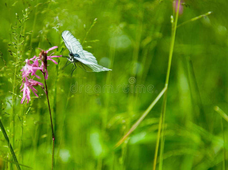 Download Butterfly on the flower stock photo. Image of pollination - 36986278