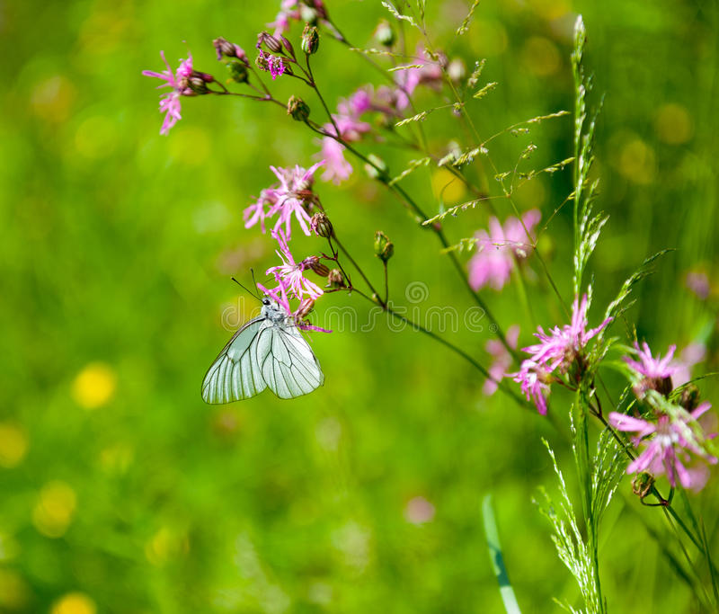 Download Butterfly on the flower stock photo. Image of white, spring - 36986288
