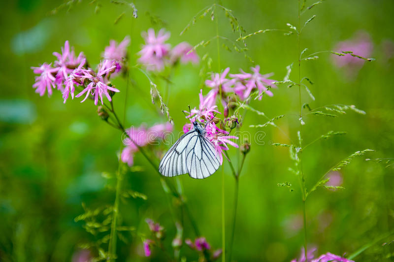 Download Butterfly on the flower stock image. Image of butterflies - 36986291