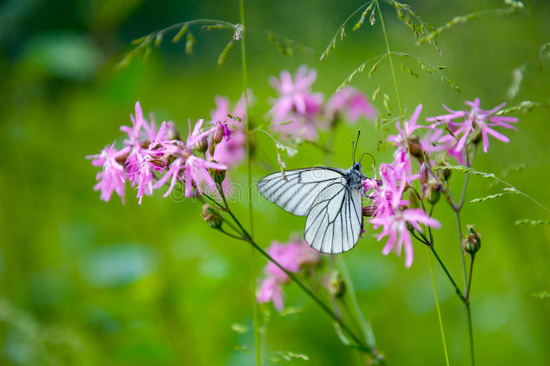 Download Butterfly on the flower stock photo. Image of beautiful - 36986298