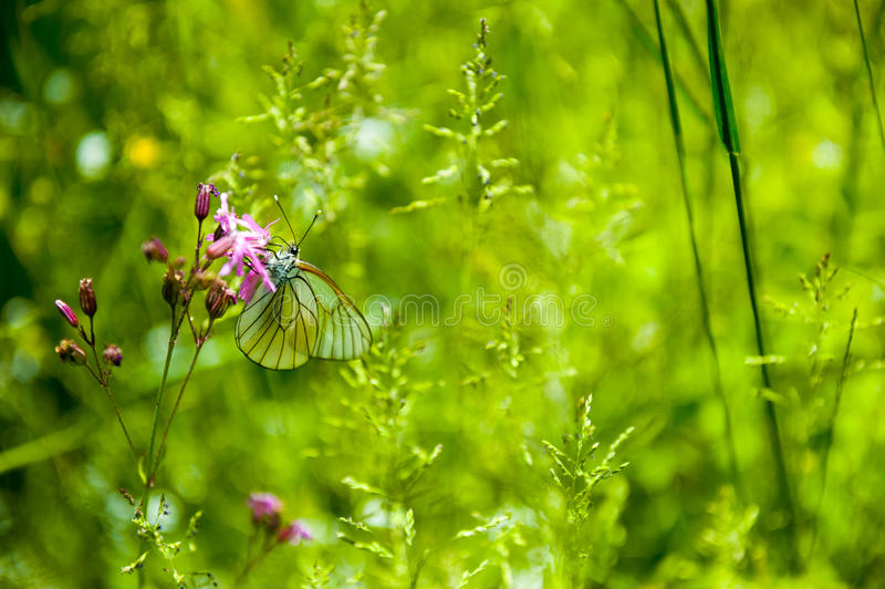 Download Butterfly on the flower stock photo. Image of color, butterfly - 36986300