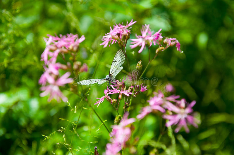 Download Butterfly on the flower stock photo. Image of pollination - 36986308