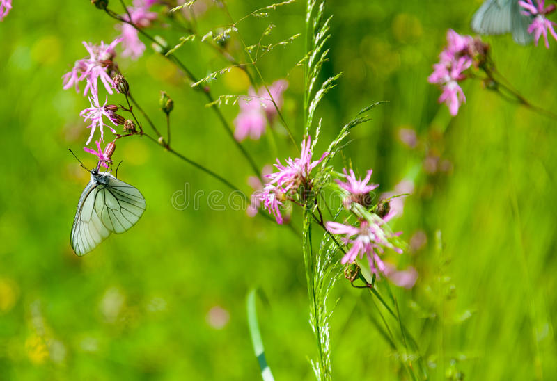 Download Butterfly On The Flower Stock Photos - Image: 36986313