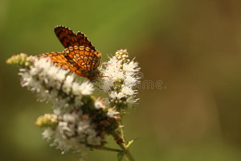 Butterfly in a flower. Close up of a butterfly in a flower in Portugal stock photos