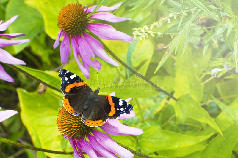 Butterfly on the flower. Concept: garden plants, nature stock photography