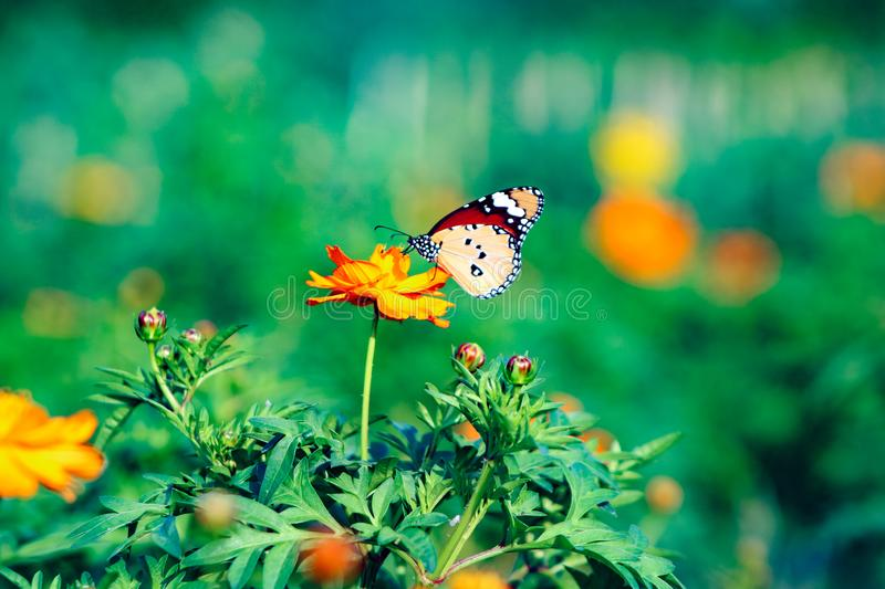 Butterfly on flower in garden royalty free stock images