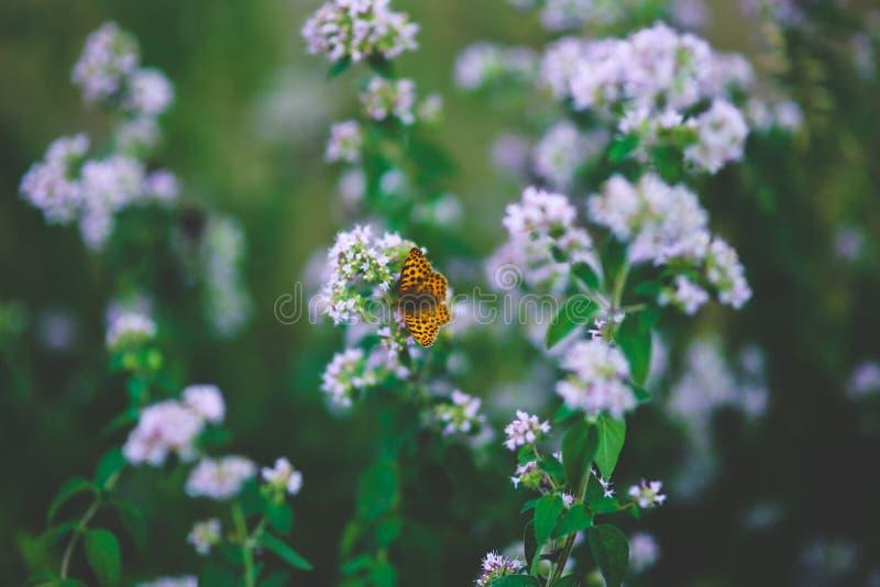 Butterfly on flower II stock image