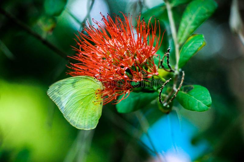 Butterfly with flower. A lonely butterfly sucks nectar with it flowers on the tree royalty free stock photos
