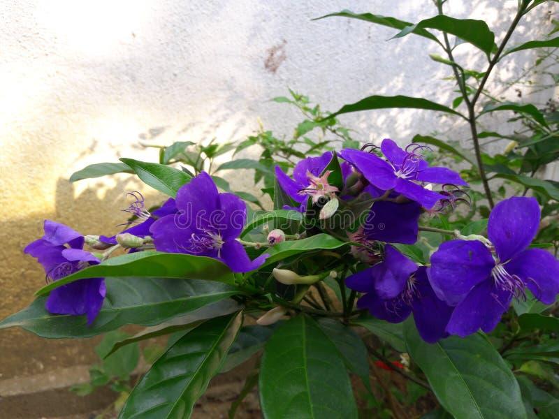 Butterfly flower stock photos
