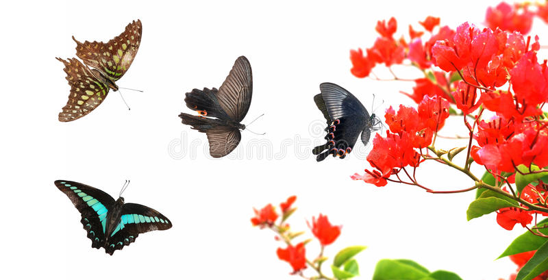 Butterfly flower nature stock photography