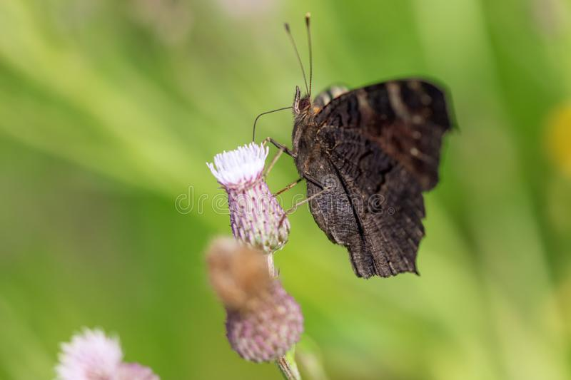 Butterfly on a flower in the nature royalty free stock photography