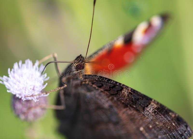 Butterfly on a flower in the nature stock photography