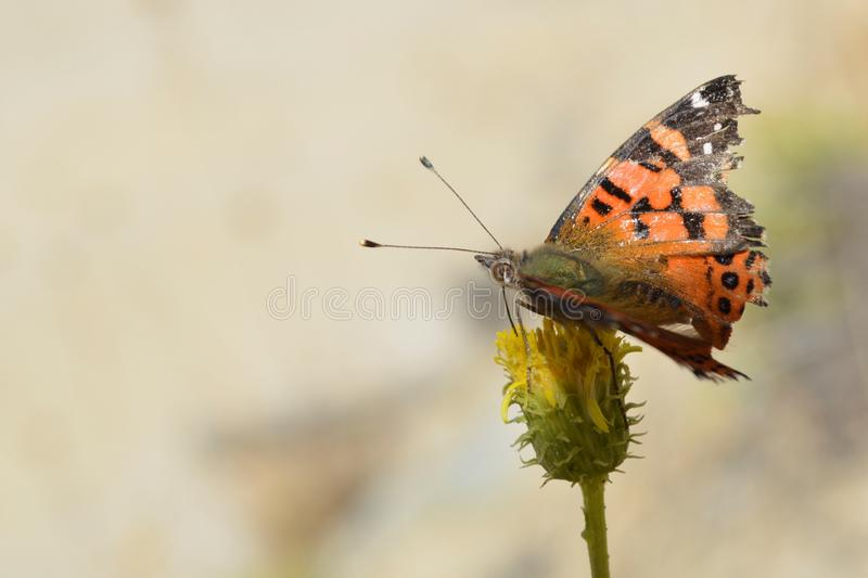 Butterfly in a flower stock photography