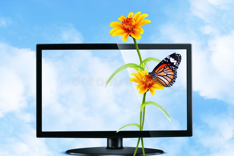 Butterfly and flower on Television stock photos