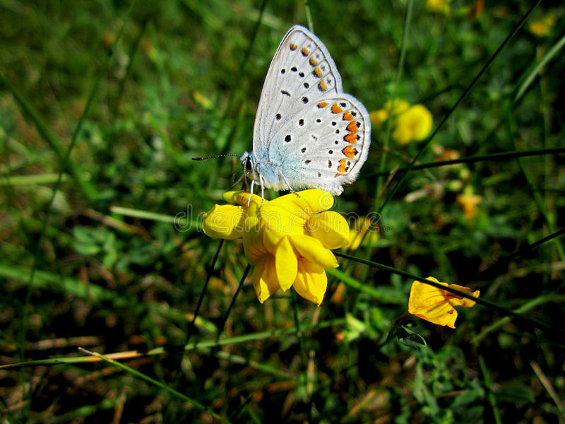 Butterfly on a flower stock images