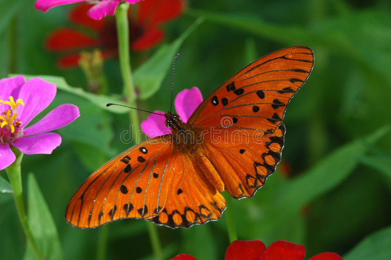 Butterfly and flowers royalty free stock photo