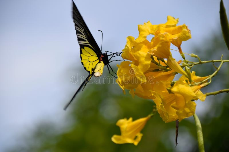 Butterfly and Flowers. It`s naturally beautiful stock photo