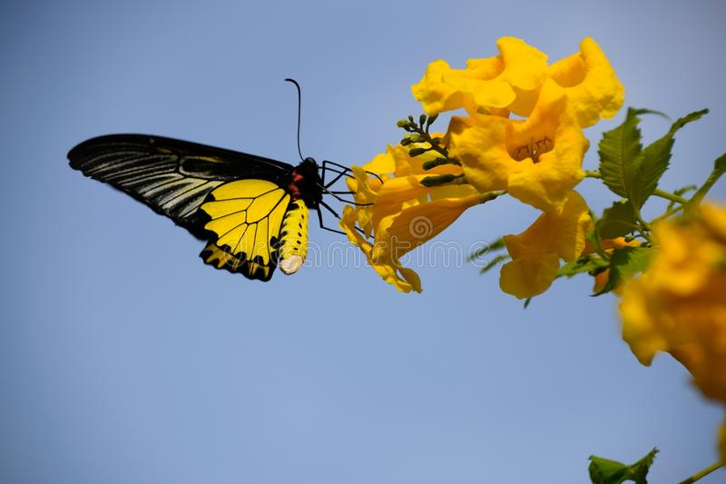 Butterfly and Flowers. It`s naturally beautiful royalty free stock image