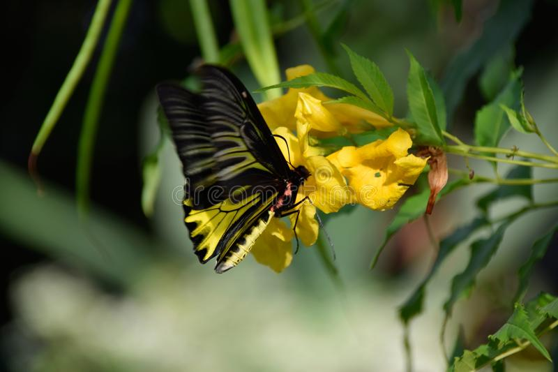 Butterfly and Flowers. It`s naturally beautiful stock photos