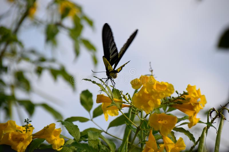 Butterfly and Flowers. It`s naturally beautiful stock photography