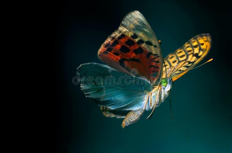 Butterfly flying. On dark bottom