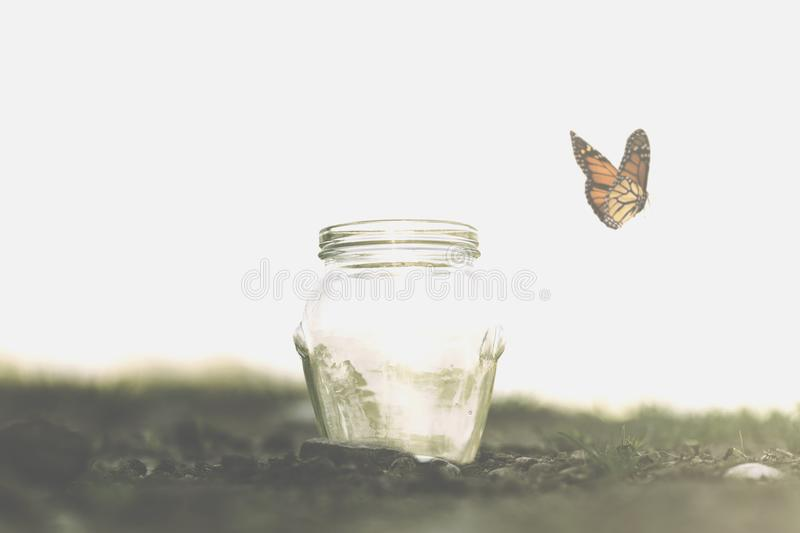 a butterfly flying happy in the air stock images