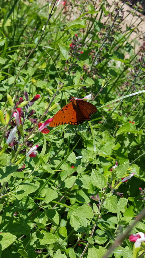 Butterfly garden stock images
